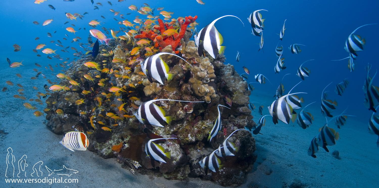 Diving aqaba gardens of light for Aqaba dive