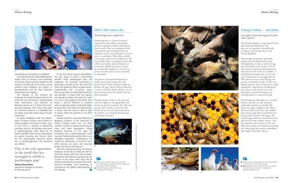 article by Nikki Schriber - copyright VISION Managazine